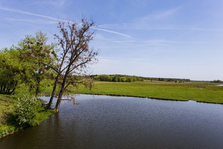 배경에 강이있는 녹색 잔디 스톡 콘텐츠 - 80369686