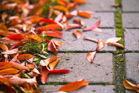Wet concrete walkway in a garden full of falling leaves. Stock Photo