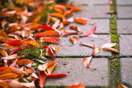 Wet concrete walkway in a garden full of falling leaves. Stock Photo