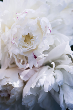 Floral background. Pink and white peonies pattern. Bouquet of peonies Stok Fotoğraf