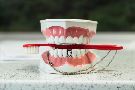 Brush Plastic Teeth Model, Dentistry Stock Photo