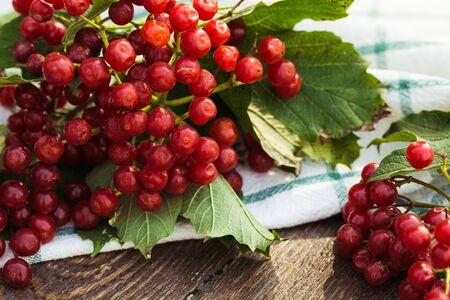 Viburnum berries with bunches. Viburnum on wooden background