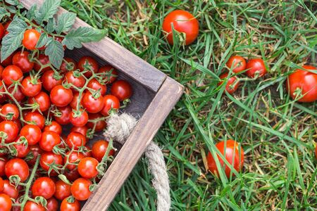 Ripe tomatoes on a wooden tray. On the green grass