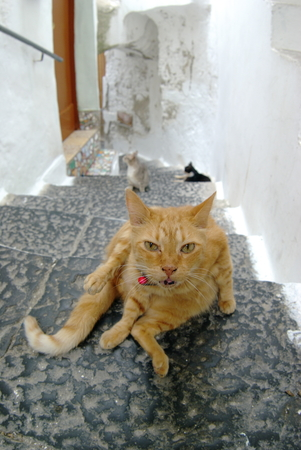 Amalfi close of cats in the alley photo