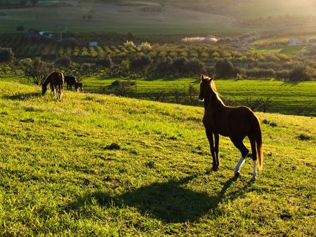 country landscape at sunset with horses Stock Photo - 3359078