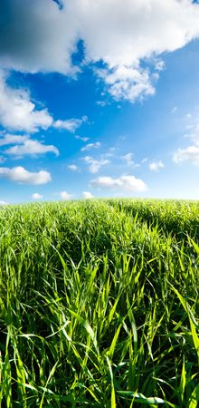 Morning with green field and white clouds Stock Photo - 3368466
