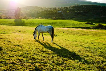 country landscape at sunset with white horse Stock Photo