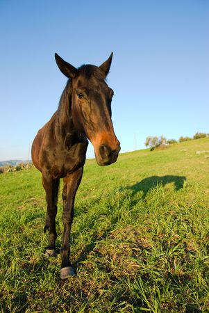 horse in the country field Stock Photo - 3368449