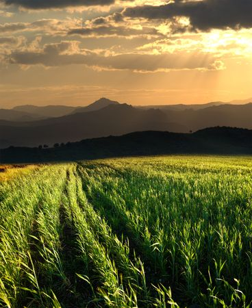 sunset on the field of grain and horizon hills