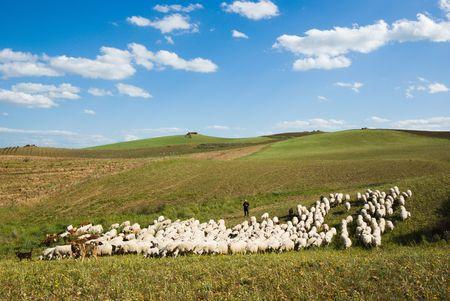 shepherd and herd pass through rural area Stock Photo - 3368463