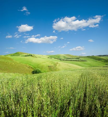 landscape for green hill of wheat and white clouds in the blue sky photo