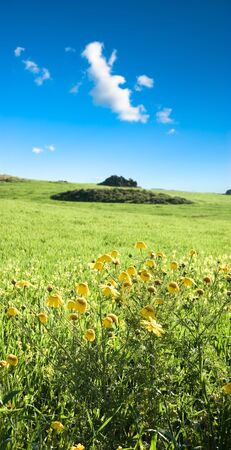 landscape for yellow country flowers photo