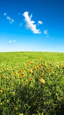 landscape for yellow country flowers Stock Photo - 3368429