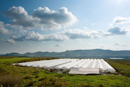 invernadero: Paisaje rural con el cultivo en invernadero