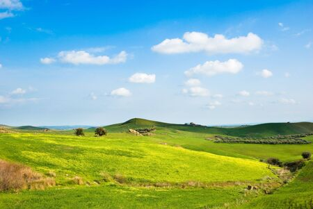 hilly landscape with trees, yellow grass and white clouds Stock Photo - 3372120