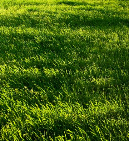 texture for green meadow at  twilight photo
