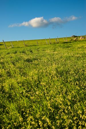 green grass and blue sky with cloud Stock Photo - 3372121