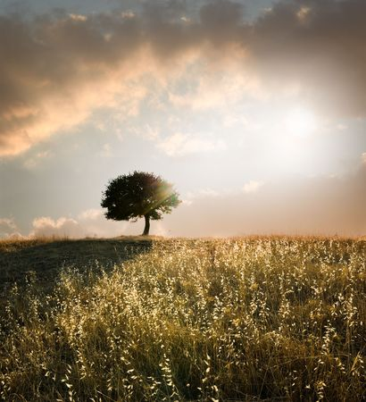 solitary oak tree in the sunset Stock Photo - 3427906