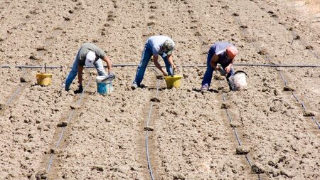 workers working in the fields