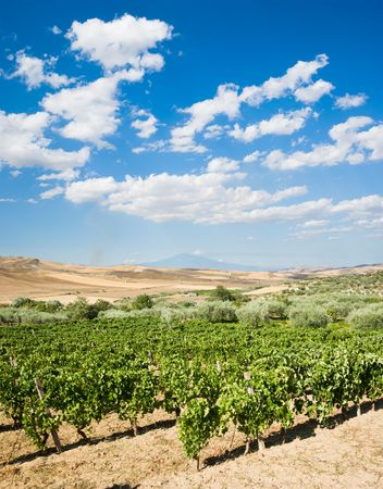 vineyard plain: landscaped of vineyard on background of volcano Etna and white clouds Stock Photo