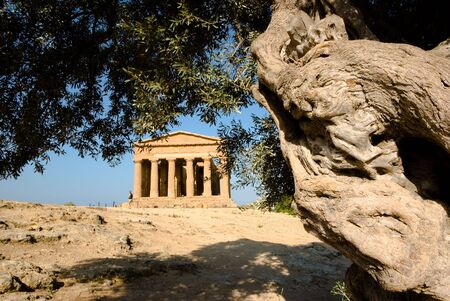 doric temple of Concordia in Agrigento with olive tree Stock Photo - 3579223