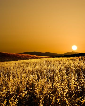 field of cereal in backlight, silhoutte of hill in the sunset photo