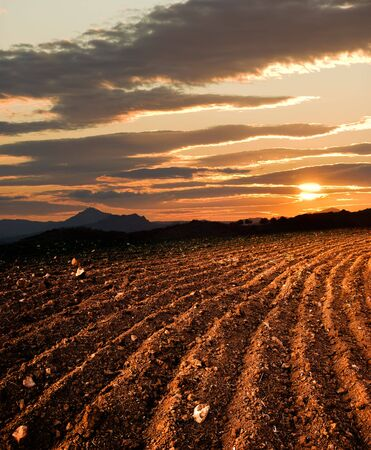 plowed: plowed land, on background sun dawn the hill
