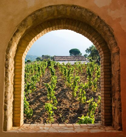 arched: arched window on the vineyard with roof