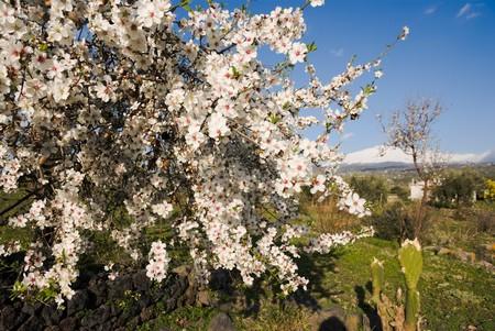 lussureggiante: arbusto coperto da una rigogliosa fioritura bianca