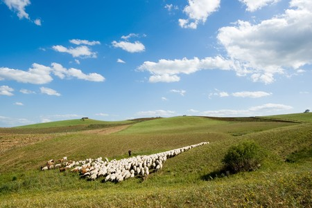 shepherd and herd pass through rural area Stock Photo - 4261392