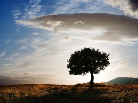 solitary oak tree at twilight photo
