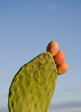 prickly: Prickly Pear Cactus with Fruit Stock Photo