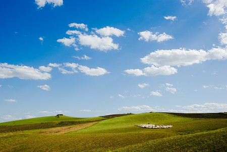 shepherd and herd pass through rural area Stock Photo - 4261439