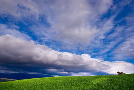 mood moody: green grass and stormy sky (horizontal