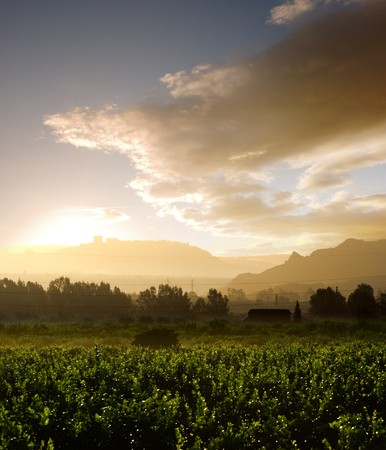 misty sunrise on cultivated area Stock Photo - 4411146