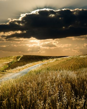 natural moody: Track crosses field of cereals with sky dramatic