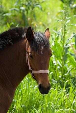 headshot for horse on background blurred lush vegetation photo