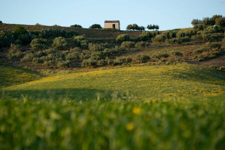 Rural Landscape with grass in foreground blurred Stock Photo - 4918059