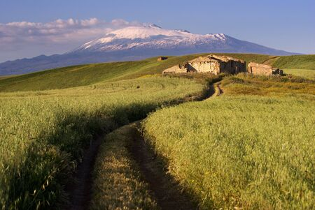 track cross cereal field on background Etna photo