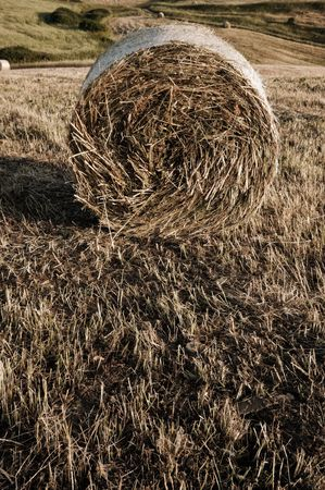 vintage composition with one Roll of hay  photo