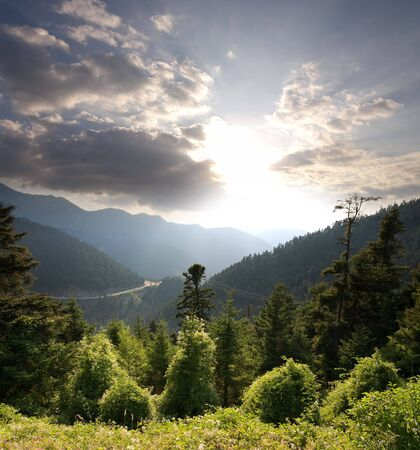 dusk on forest in land considered the Swiss Alps of Greece