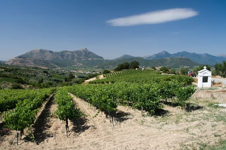 rows of plants of grapevine and white memorial road of Wine Roads in Nemea, Greece