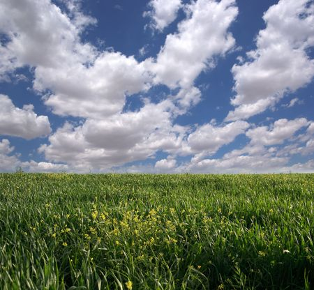 a field of green grass and yellow flowers against a blue cloudy sky Stock Photo - 6259664