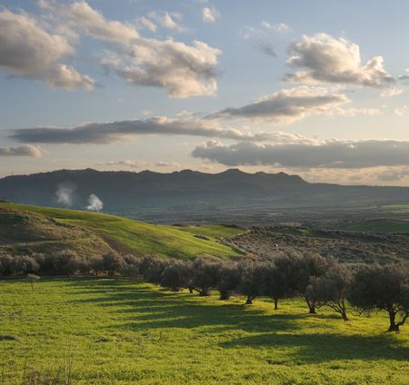 long shadows of a row of olive trees in a green valley at the twilight photo