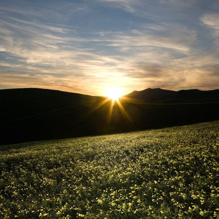 the last rays of sun are illuminating a meadow flowery of yellow clover photo