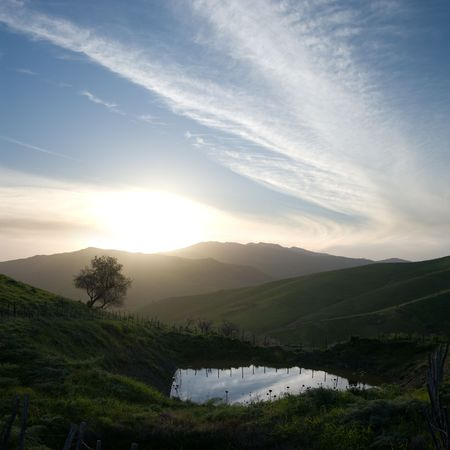lonely tree and pond at the sunset on the ridges of the misty mountains