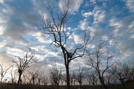 wide view of the silhouette of bare trees on the horizon against the cloudy sky at dawn  photo