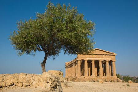 agrigento: doric temple of Concord in the valley of temples and olive tree