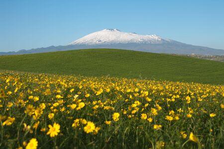 꼭대기가 눈으로 덮인: yellow flowering, green grass, white of snowcapped Etna and blue sky of sicilian landscape