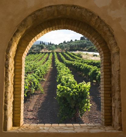 arched: view through a window arched stone and brick along the rows of a vineyard at the evening  Stock Photo